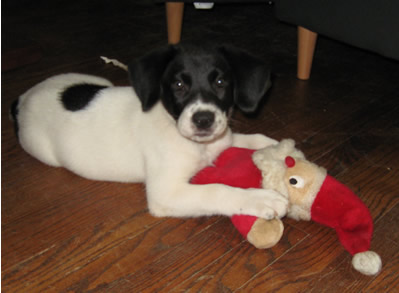 Blue the Puppy and Santa